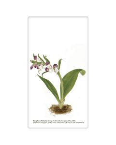Showy Orchids Tea Towel